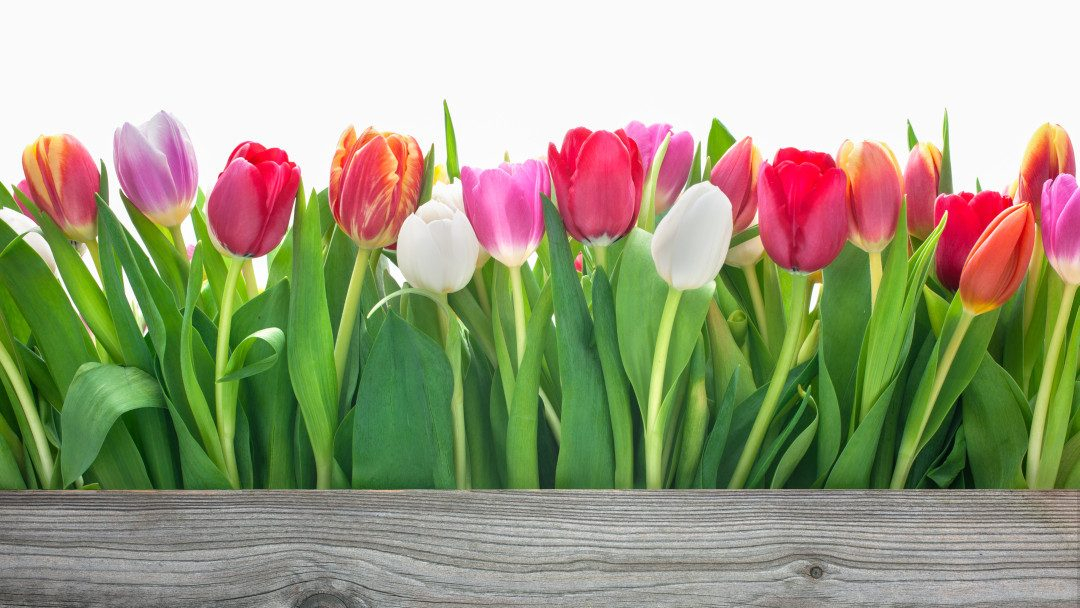 Alles neu macht der Frühling!