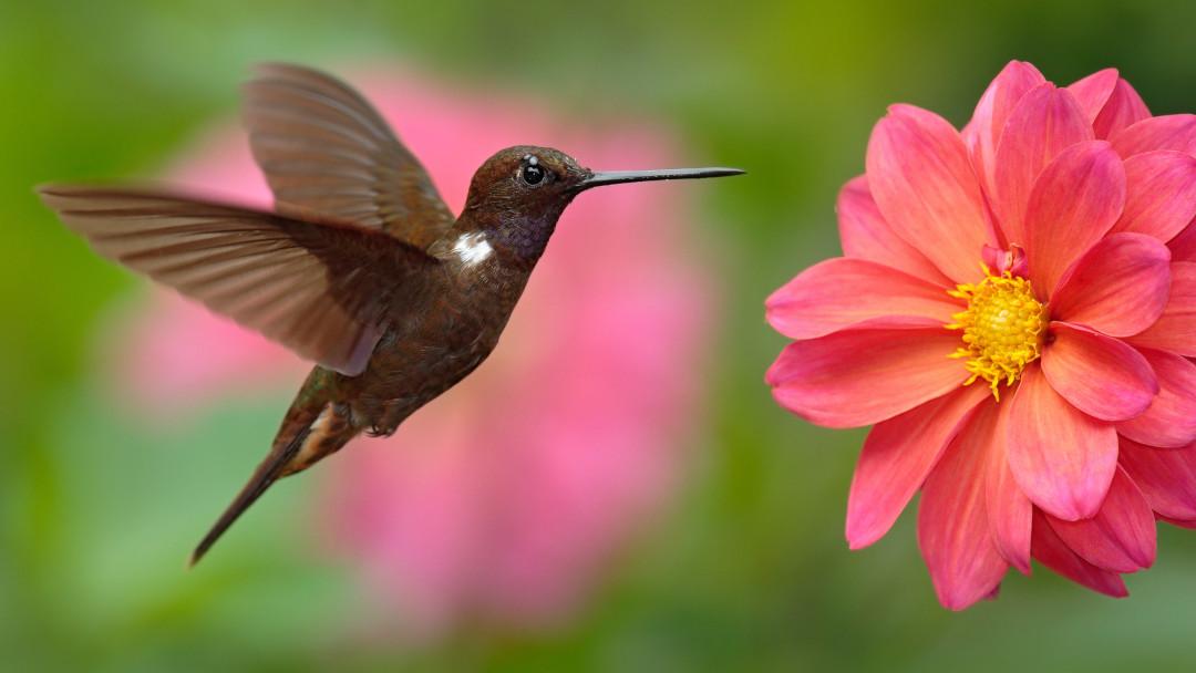 Hummingbird – oder was der Kolibri mit der Bedeutung von Inhalten zu tun hat